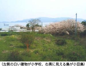 (左側の白い建物が小学校、右奥に見える島が小豆島)